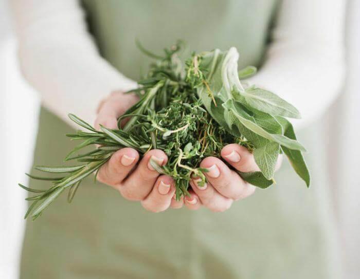 Травы восстанавливающие гормональный фон