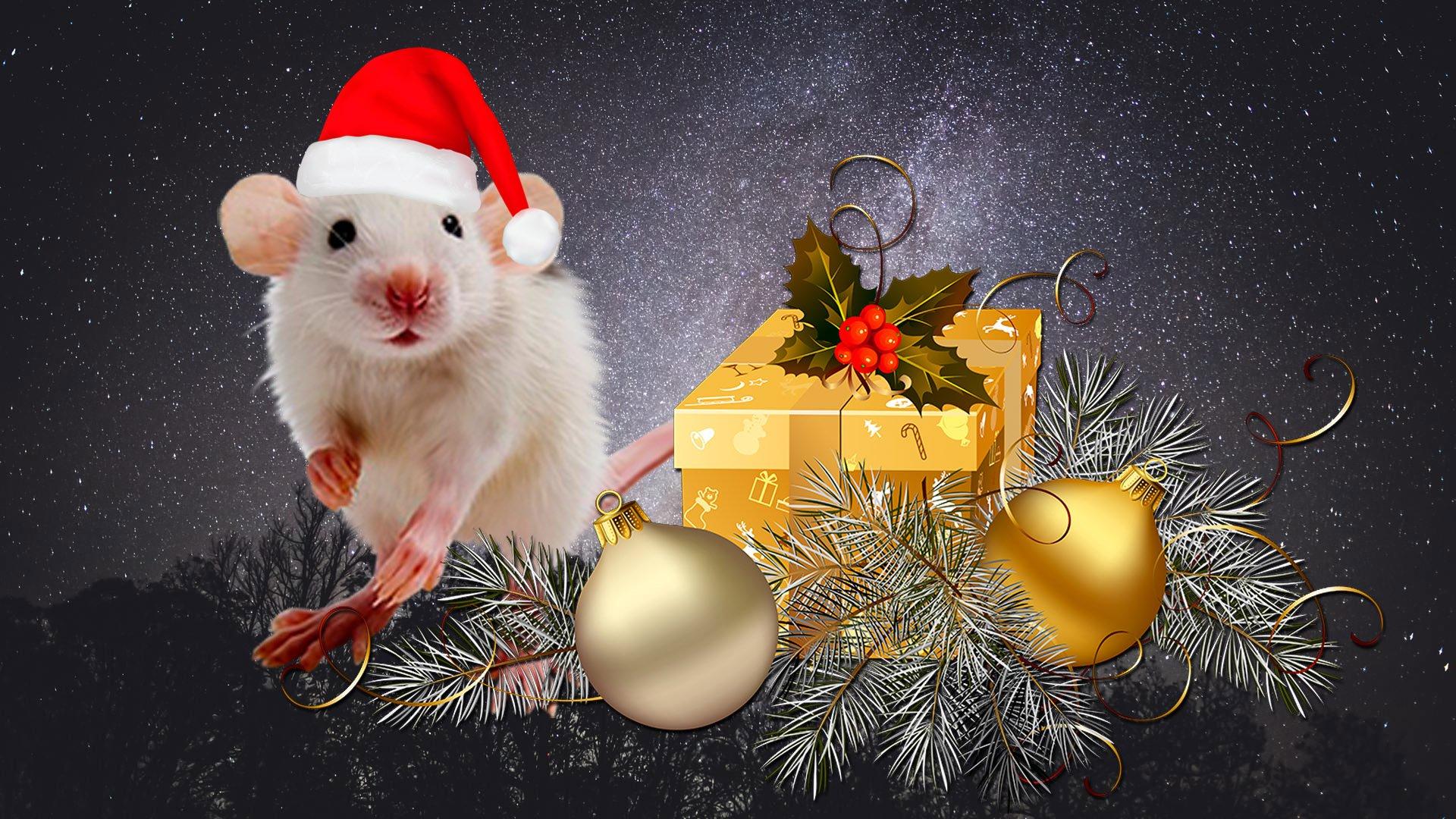 Поздравления с новым годом металлической крысы