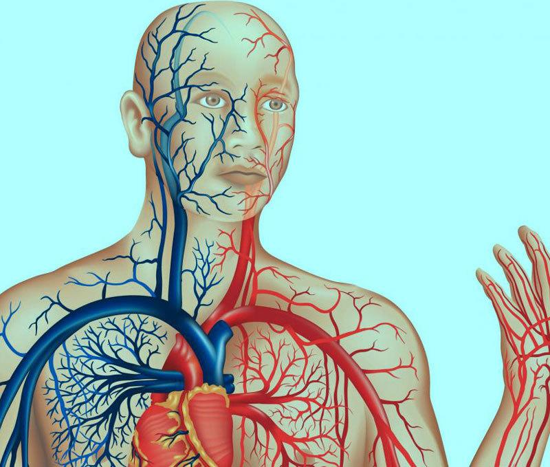 очищение сосудов головного мозга и всего организма